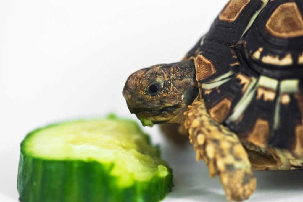 Tips About Buy Turtle Foods